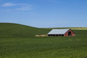 Red barn in a wheat field in the Palouse region of Washington