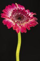 Flower close up