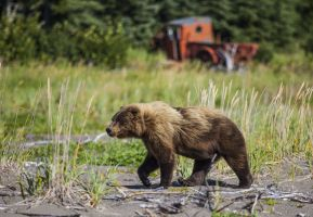 Bear and Truck
