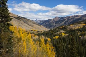 Uncompahgre National Fores, Ridgway